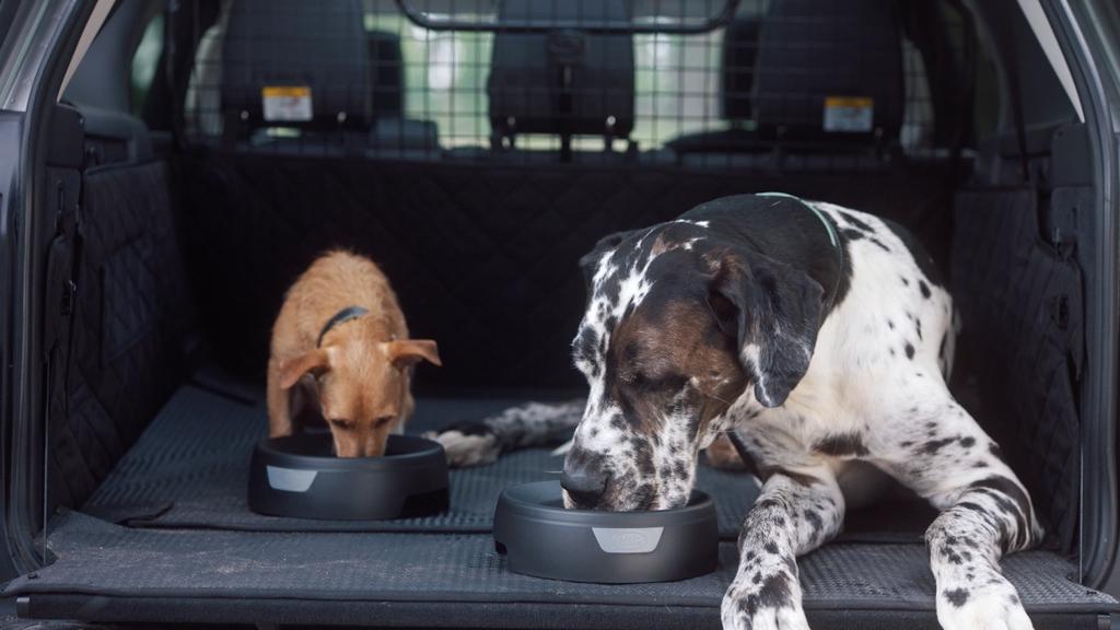 Comment voyager en voiture avec son chien en toute sécurité ?